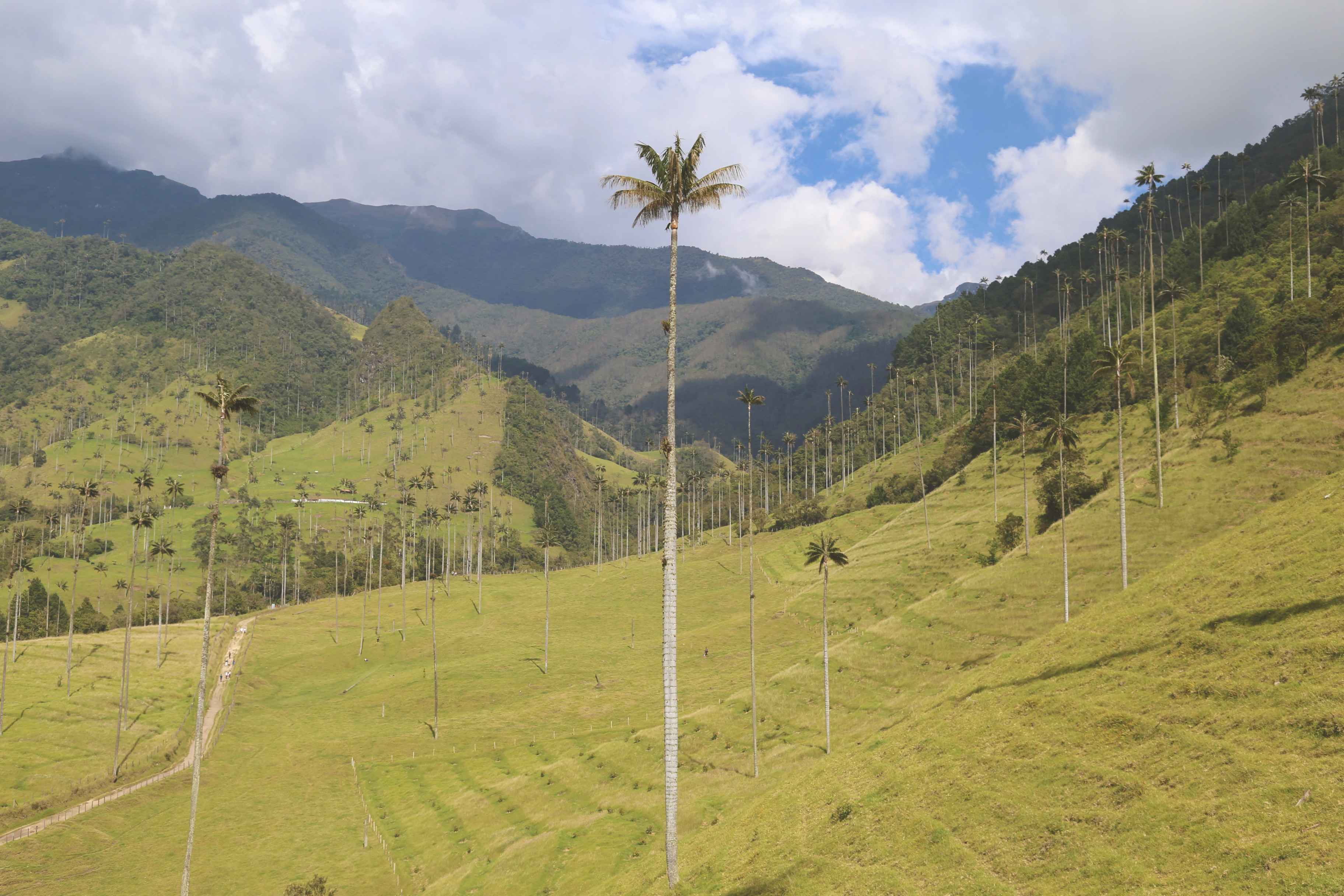 Cocora Valley New Year 4